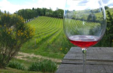 vino e panoramavino panorama